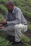 Asnake Fikre, Ethiopian Institute for Agricultural Research