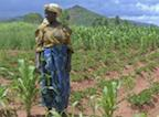 africa-woman-crops_lg