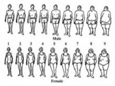 Body-type-scale